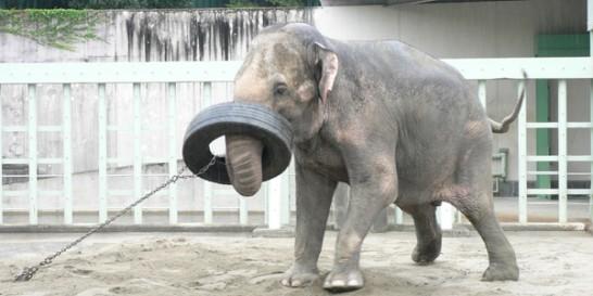 象のエクササイズ