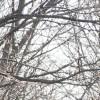2月の木々